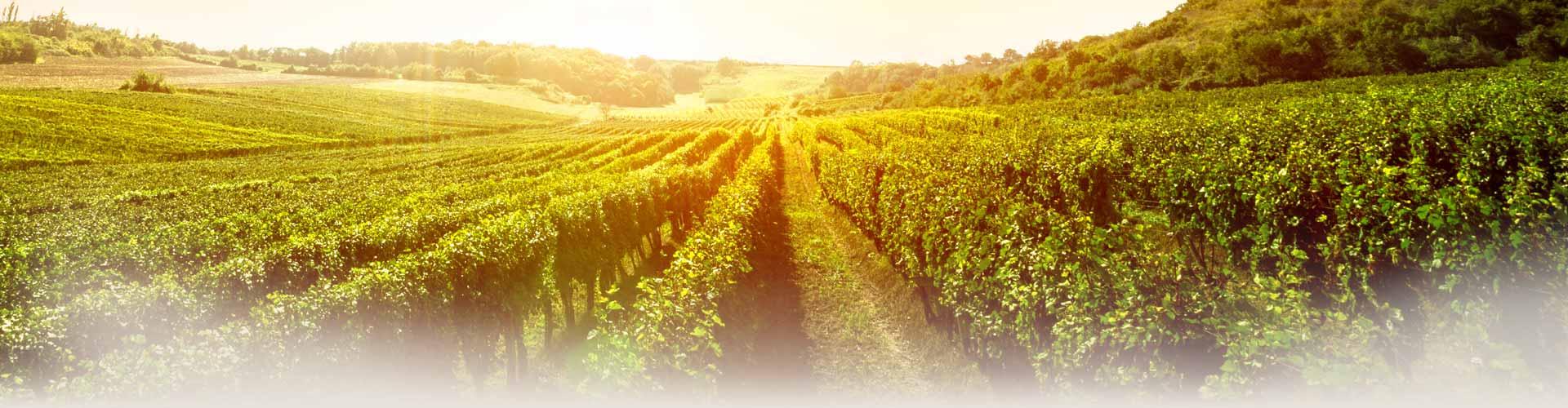 header-bg-minnegoed-wines
