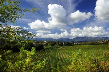 DSC_6286-Ogliano-Panoramica con vigneti-Ottobre 2009 b.r