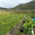 Minnegoed Wines Shannon2 Galerij