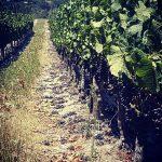 Minnegoed Wines Shannon3 Galerij