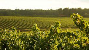 Minnegoed Wines Amistat Wijngebied Galerij 4