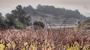 Minnegoed Wines Wijnhuis Amistat Omgeving Galerij 2