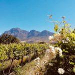 Minnegoed Wines Stellenbosch Mountains
