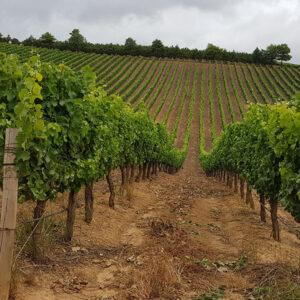 Minnegoed Wines La Brune Galerij 6